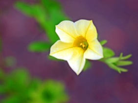 Floral photography of a yellow flower.