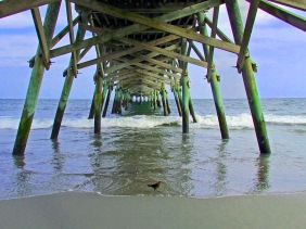 Seascape photography of a bird under a pier.