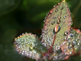 Macro nature photography of rain drops on a leaf.