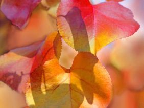 Nature photography of fall leaves.