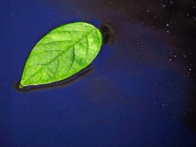 Macro nature photography of a green leaf floating on blue water.