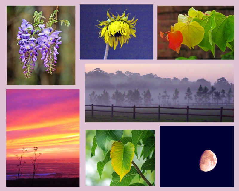 Weekly Photo Challenge: Transition