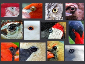 Weekly Photo Challenge: Eye Spy