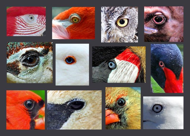Weekly Photo Challenge: Eye Spy
