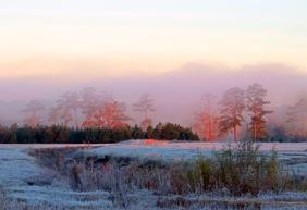Landscape photography of a foggy, frosty morning.