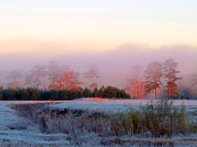Landscape photography of a foggy, frosty morning.