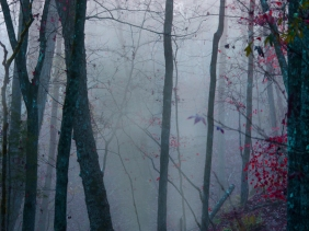 Landscape photography of morning fog in the woods from Blythewood, SC.