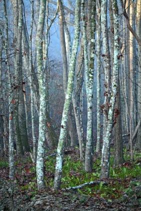 Landscape photography of woods in Blythewood South Carolina.