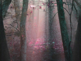 Landscape photography of early morning in the woods.