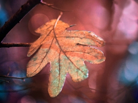 Macro nature photography of a fall leaf.