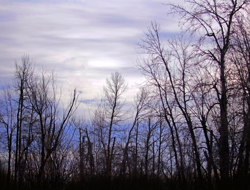 Skyscape behind bare trees.