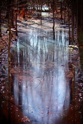 Nature photography of soft reflections in a pond.