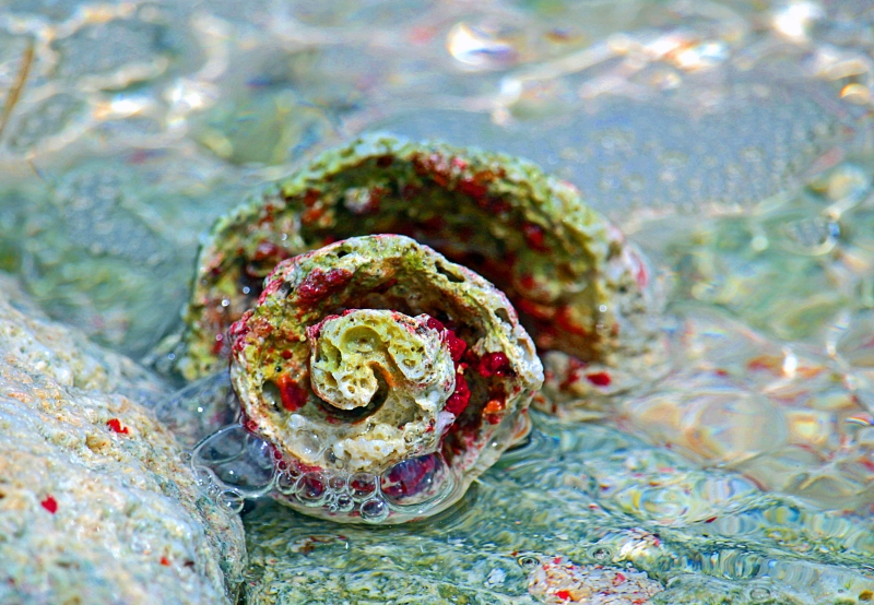 Macro nature photography of the spiral inside a sea shell.