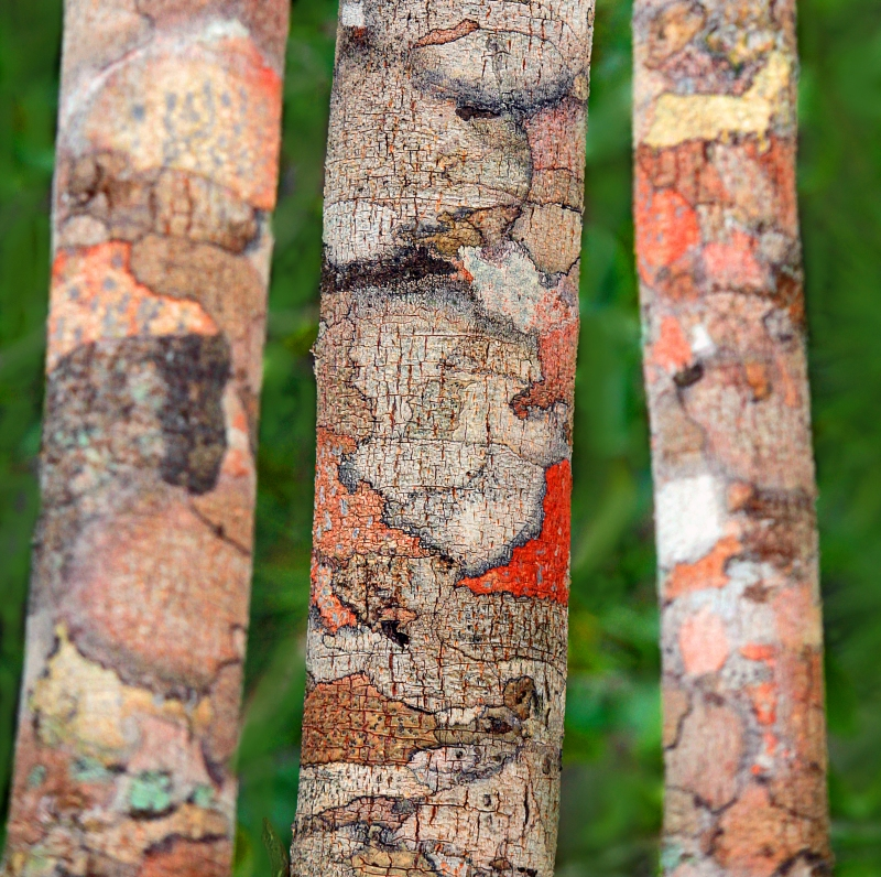 Macro nature photography of colorful tree bark.