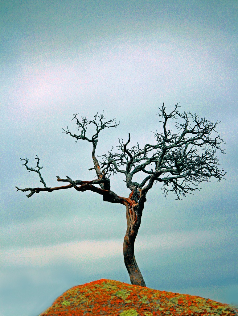 Landscape photography of a bare tree on top of Enchanted Rock, Texas.