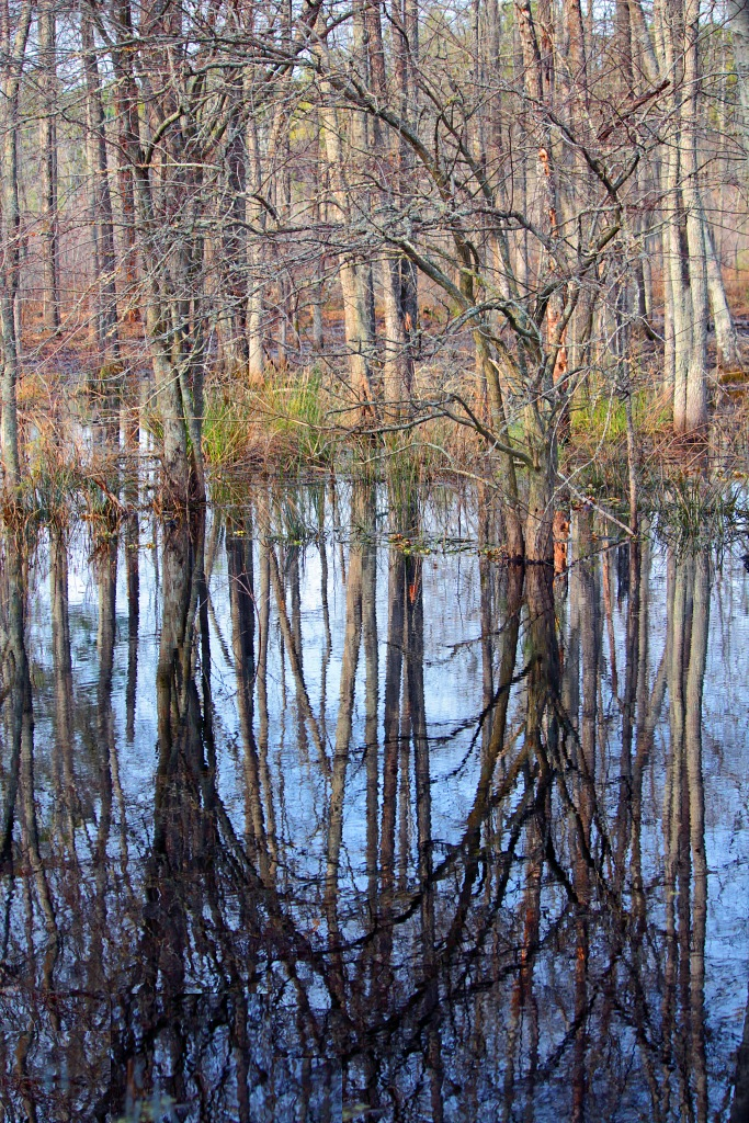 Nature photography of tree reflections in a pond.