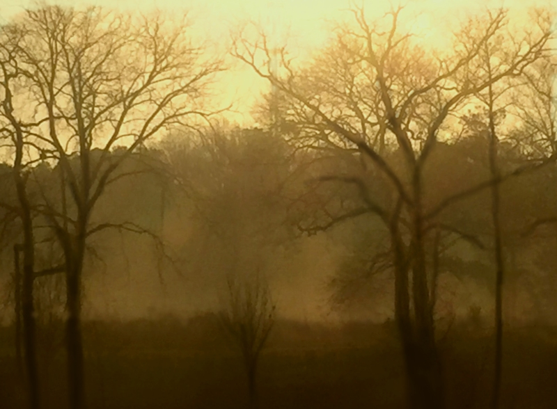 Landscape photography of a foggy morning and bare trees.
