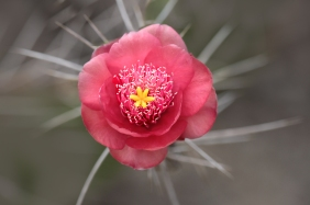Macro floral photography of a pink flower.