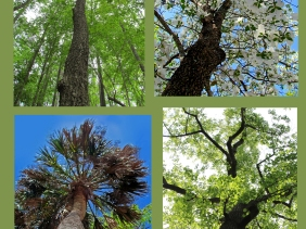 Weekly Photo Challenge: Look Up