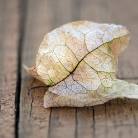 Macro nature photography of dry leaves.