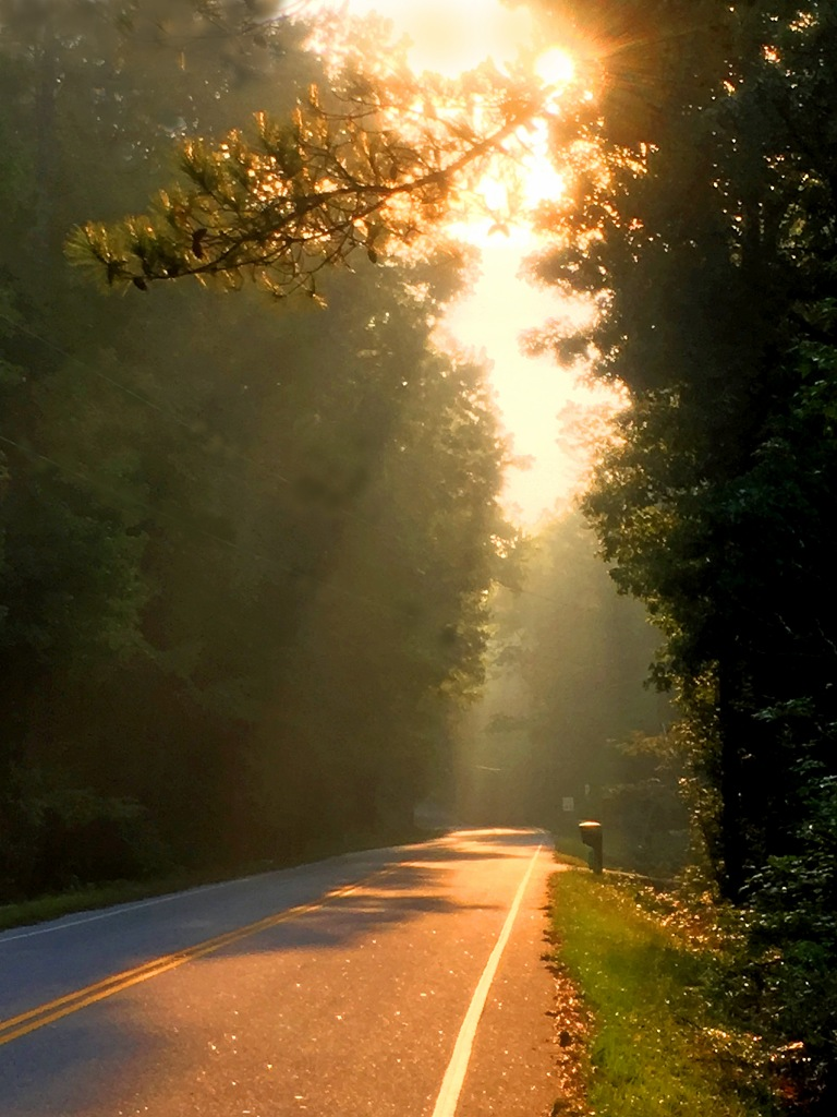 Landscape photography of sunlight streaming through the tree on a country road.