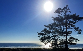 Landscape photography of sun, sky, tree, and the sea.