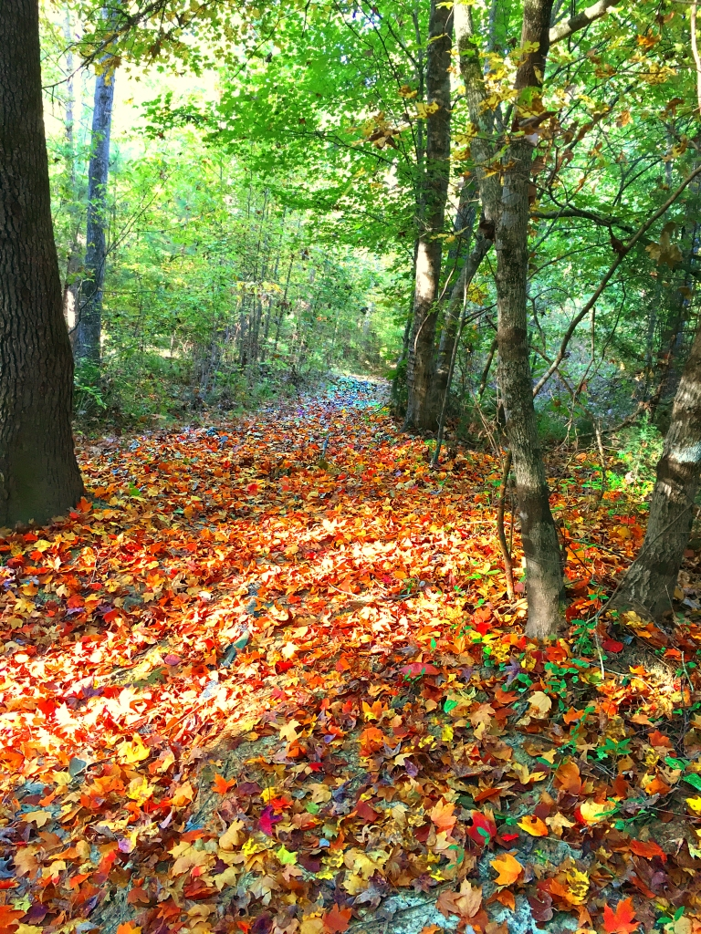 Landscape photography of fall leaves on a path in the woods.