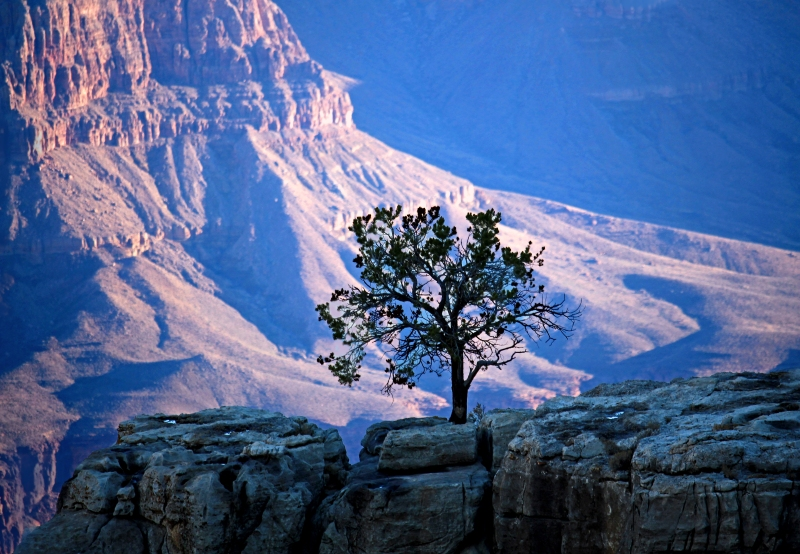 Landscape photography of a tree in the Grand Canyon, Arizona.