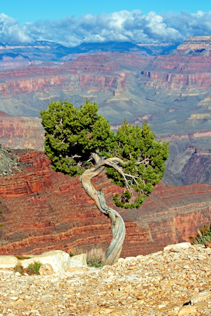 Landscape photography of a tree in the Grand Canyon.