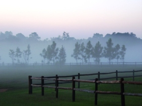 Landscape photography of a field and fog.