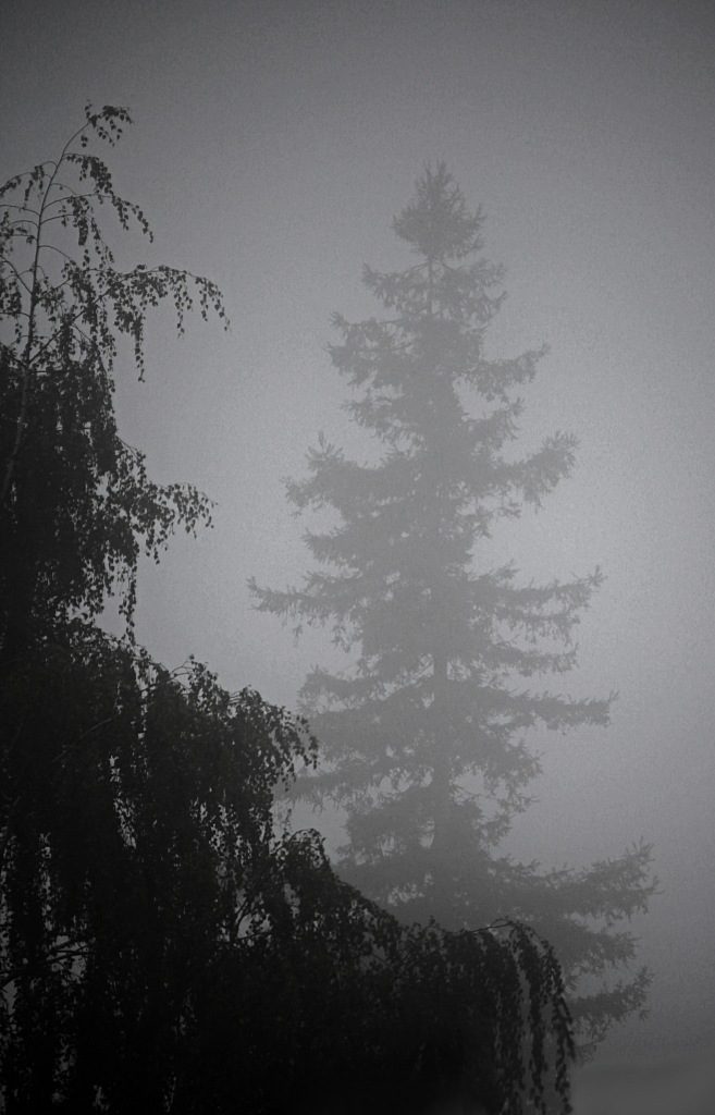 Black and white nature photography of trees and fog.