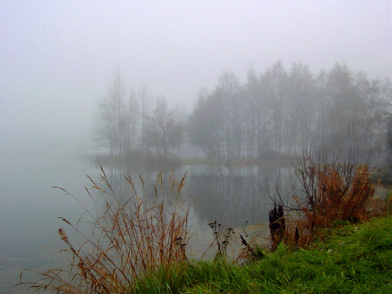 Landscape photography of a foggy pond.