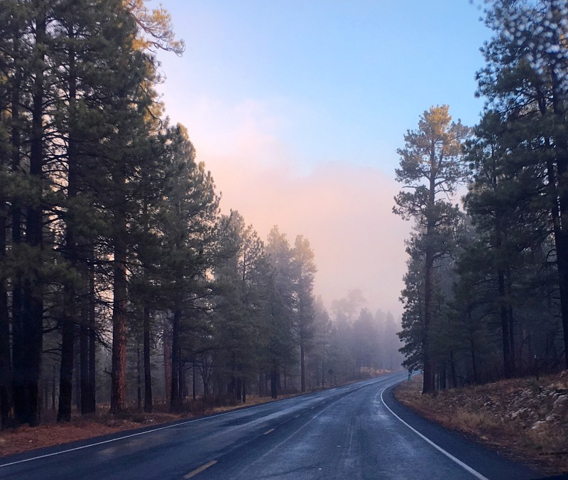 Landscape photography of a foggy tree lined road.