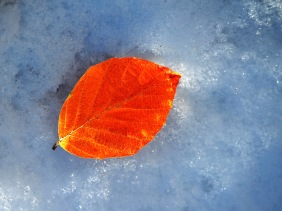 Macro nature photography of an orange leaf in the snow.