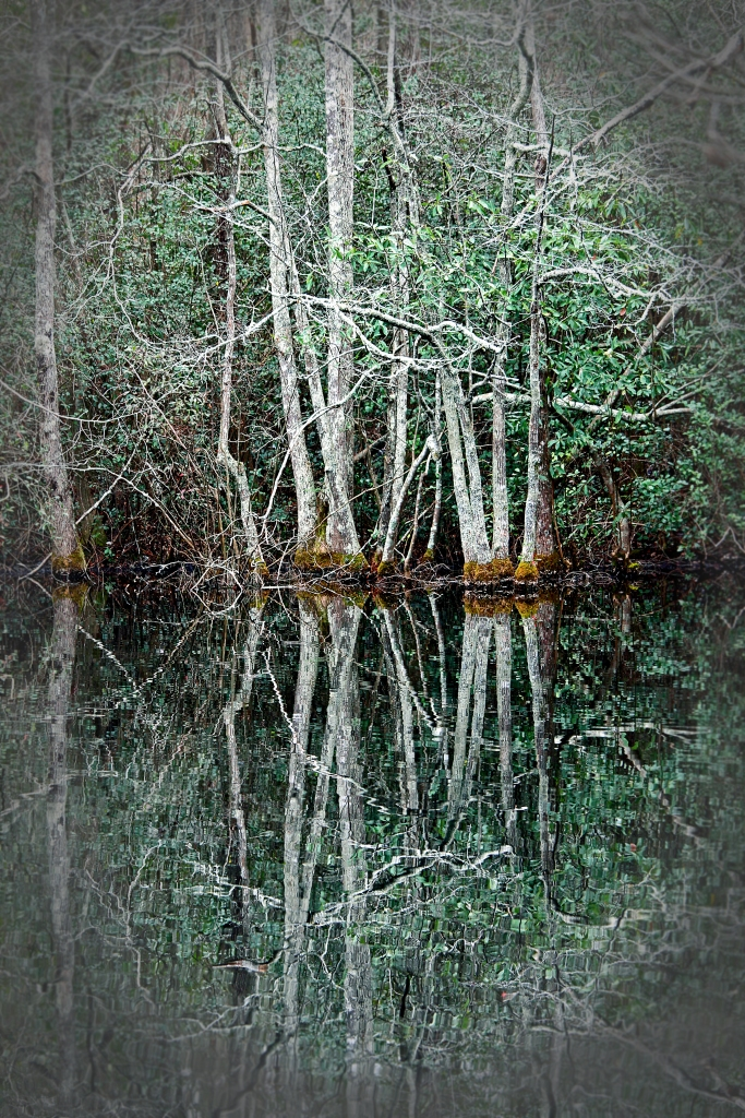 Landscape photography of spring trees reflecting on a pond in Columbia, South Carolina.
