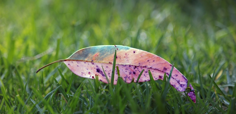 Macro nature photography of a colorful leaf in the grass.
