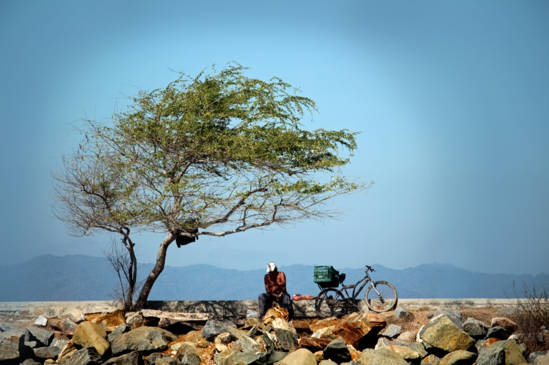 Landscape photography of the coast of Puerto Vallarta, Mexico, of a man and his bike under a tree.