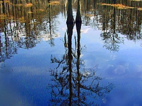 Florida landscape photography of a bare tree and surroundings reflecting in a still pond.