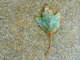 Macro nature photography of a muted-colored speckled leaf on a speckled sidewalk.