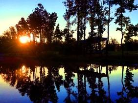 Landscape photography of a sunrise and trees reflected in a still pond.