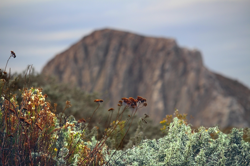 Landscape photography of peering through wildflowers and sage brush to Morro Rock.