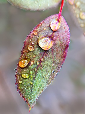 Macro nature photography of water droplets on a leaf.