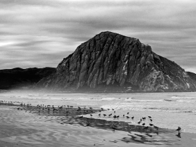 Black and white beach scape of Morro Rock, the coastline and sea birds.