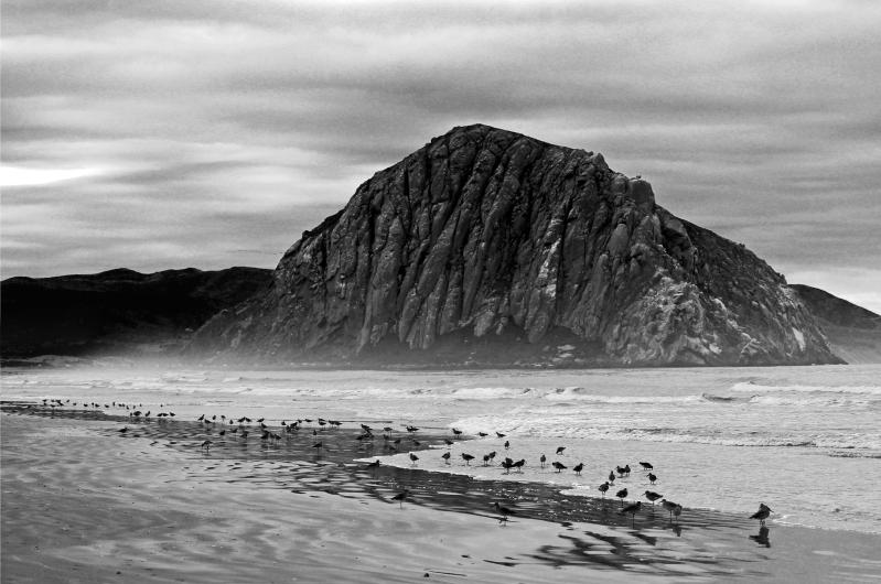 Black and white beach scape of Morro Rock, the coastline and sea birds.