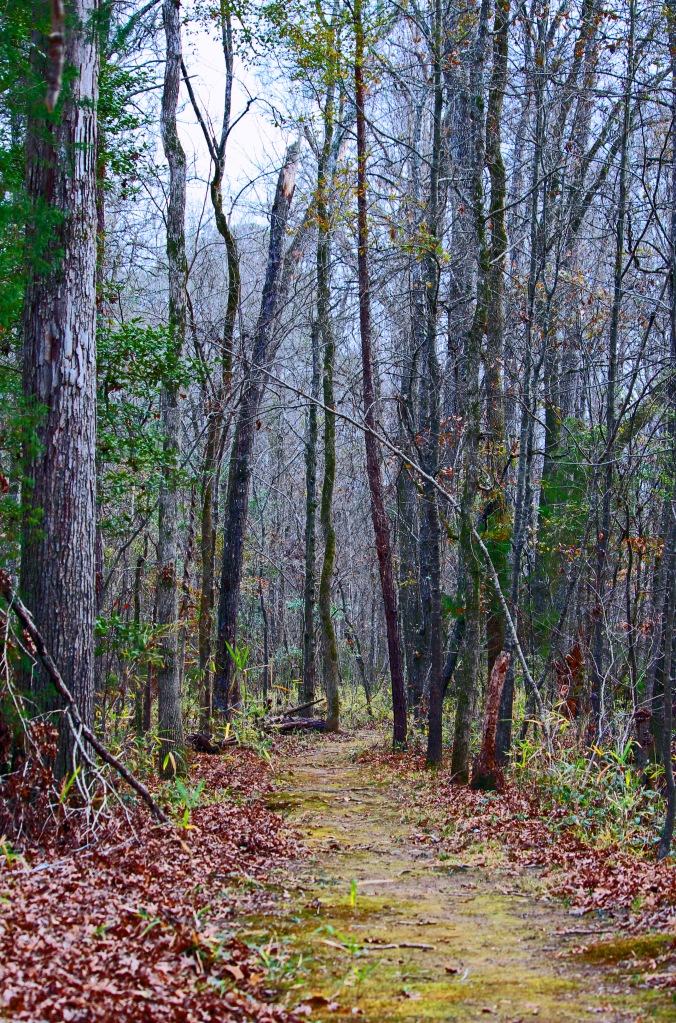 Fall landscape photography of a path in the woods.