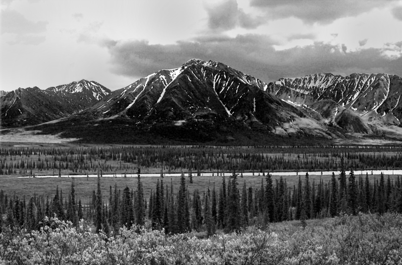 Black and whitle landscape photography of the mountains, river, and tress of the Alaskan wilderness.