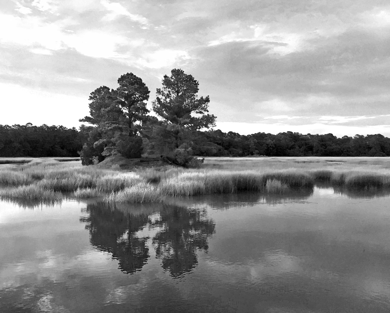 Black and white landscape photography of trees reflecting in grassy still water off the coast of South Carolina.