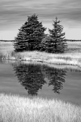Black and white travel landscape photography of two trees reflecting in still water on McNabs Island, Nova Scotia.