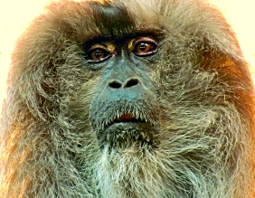 Wildlife photography of the face of a baboon from Riverbanks Zoo and Gardens in Columbia, South Carolina.