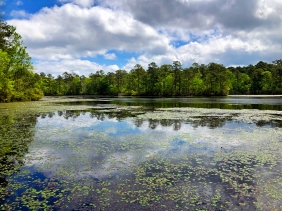 Reflection landscape photography from Sesquicentinnial State Park in South Carolina.